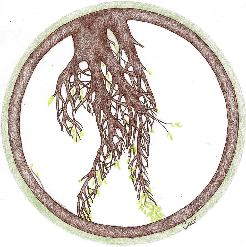 aldo dice pianta