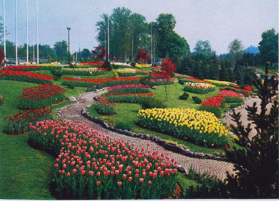 tulipani parco del Valentino Torino