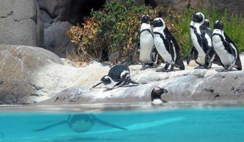 pinguini Zoom Torino - ferragosto a Torino